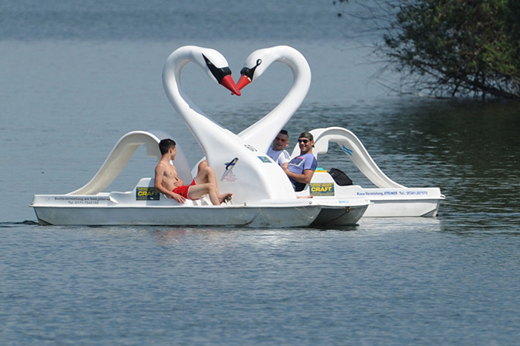 two swan paddle boats
