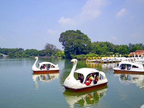 ride swan paddle boats